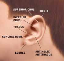 ear_anatomy